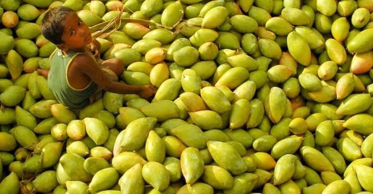 польза сушеного манго +для организма человека